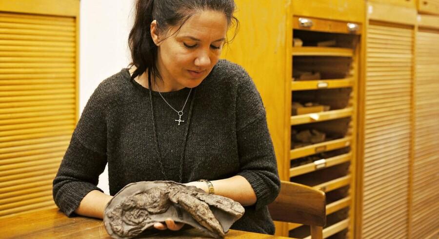 Ved Mogenstrup i Salling har man fundet et særdeles velbevaret fossilt eksemplar af en hummer, som kunne blive op til halvanden meter lang og holdt til i havene for 25 millioner år siden.