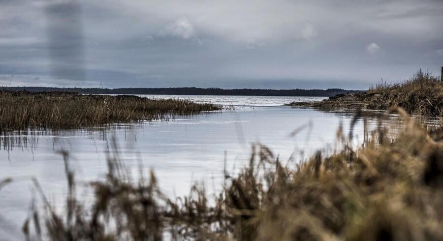 Miljøbilleder fra Roskilde fjord ved udløbet af Havelse å mellem Frederikssund og Frederiksværk