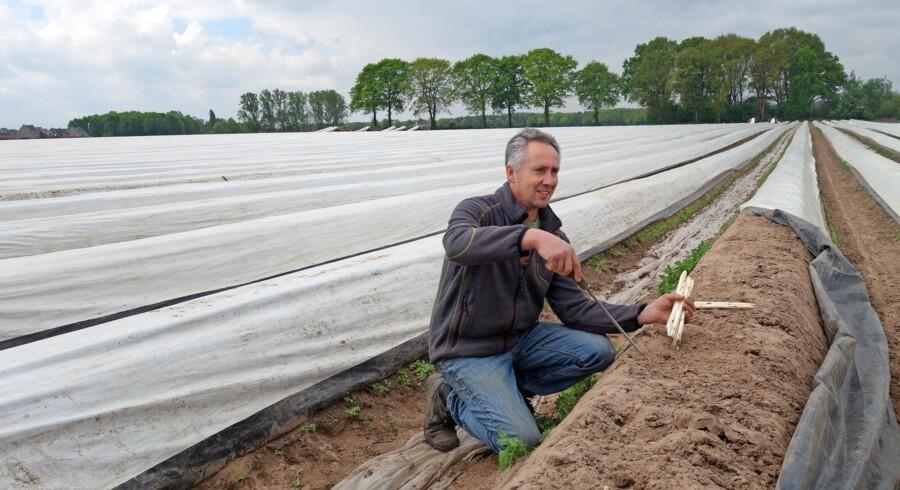 Louis Hupkens og hans familie høster asparges fra 1. april til 23. juni. Fotos: Elsebeth Mouritzen