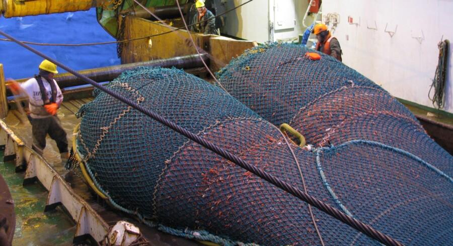 Har man købt kvoter i tide kan man tjene styrtende på at fange fisk. Her er det OceanPrawns trawler, der fanger rejer ved Canada