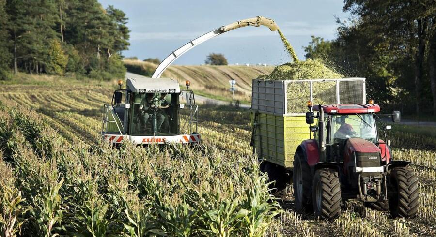 Det gik decideret rædderligt for landbruget i 2015, hvis resultater faldt markant. Lyspunktet var økologiske landbrug. Det skriver Danmarks Statistik. Arkivfoto.
