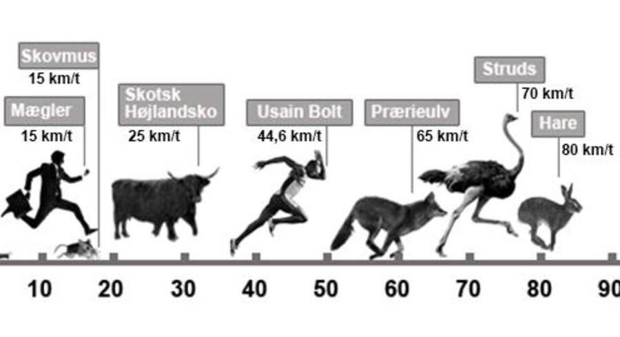 Den hurtigste ejendomsmægler skyder samme fart som skovmus og en elscooter. Grafik: Boliga.