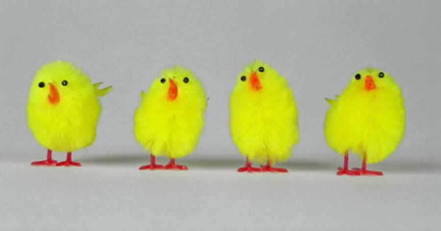 Kyllinger til pynt. foto: Bjørn Kähler <br>