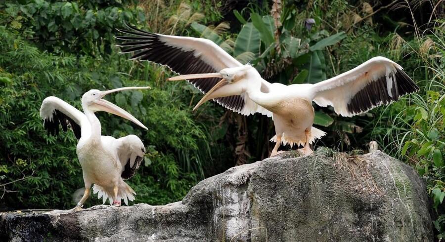 Fugleinfluenzaen har spredt sig til flere lande.