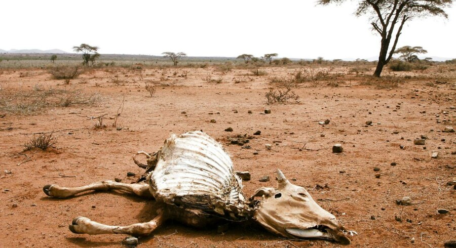Arkivbillede fra Etiopien 2011, hvor landskabet bliver mere og mere tørt.