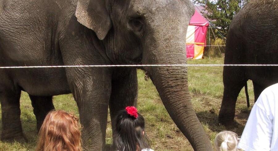 »Cirkuselefanterne kan noget! De hygger sig med det og får en godbid, hver gang de laver et trick.« Arkivfoto