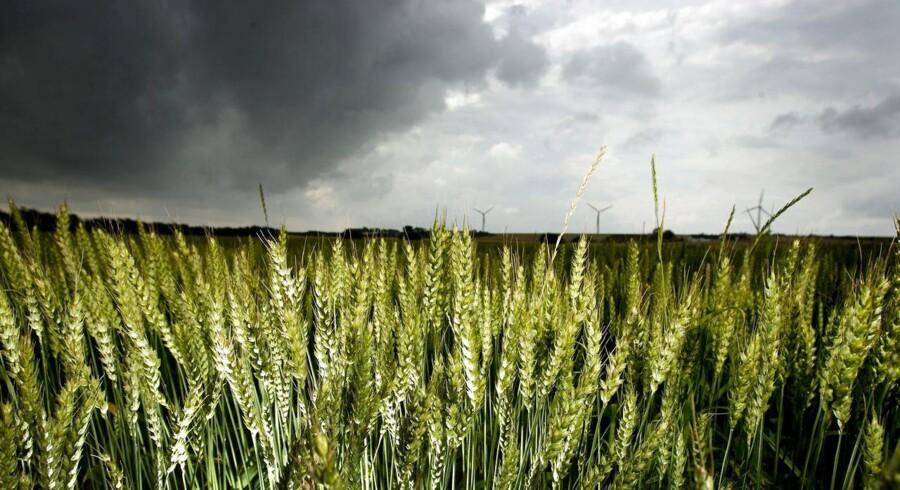 Der dannes mørke skyer over de danske landmænd. En indkomstprognose viser, at to år med stabil indtjening afløses af underskud for en stor del af erhvervet.