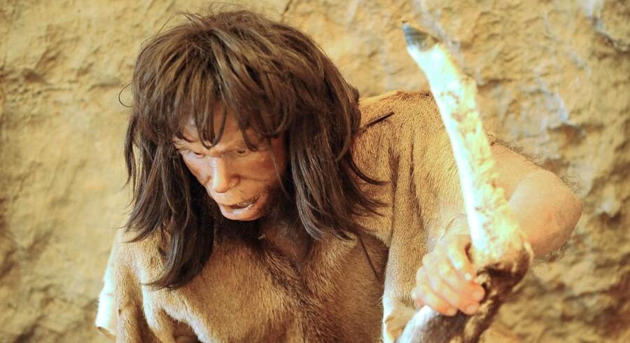 Halvdelen af de europæiske HLA-gener, som er afgørende for vores immunforsvar, stammer fra Neandertalerne. Uden disse gener havde de første mennesker måske aldrig overlevet de sygdomme, som de stødte på uden for Afrika.