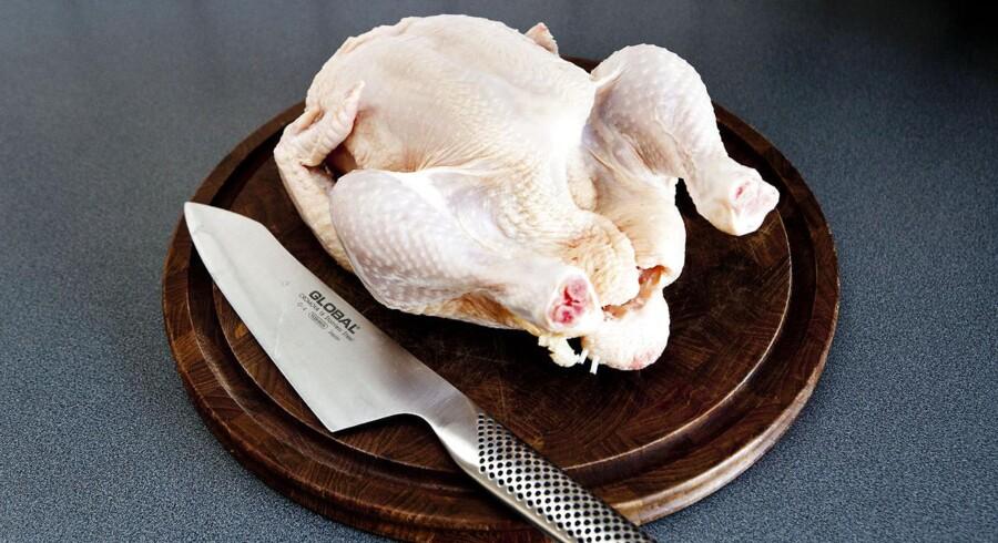 ARKIVFOTO 2012 af kylling.