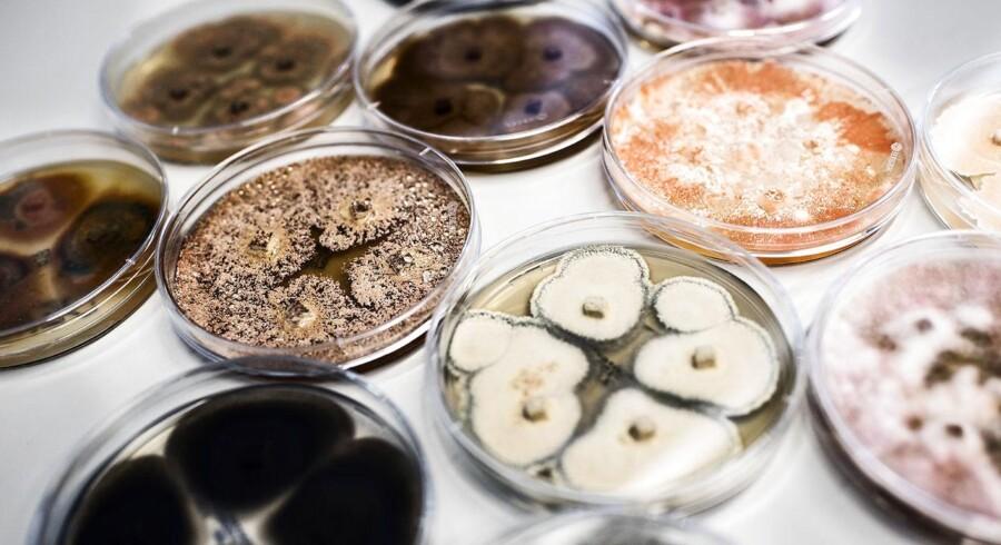 Svampe son er indsamlet til at danne forskellige enzymer.