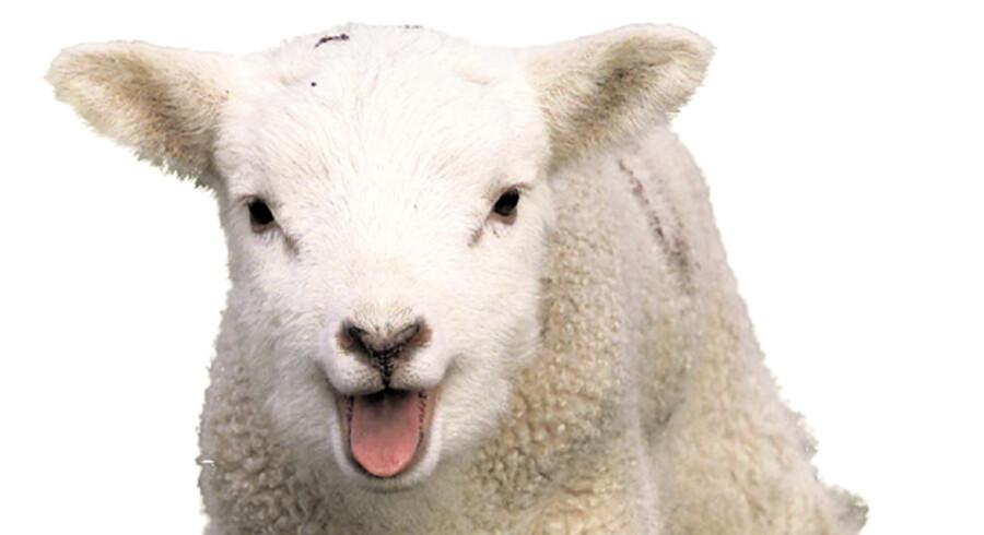 Påskelammet skal beholde pelsen på – det bliver en kold påske i år.