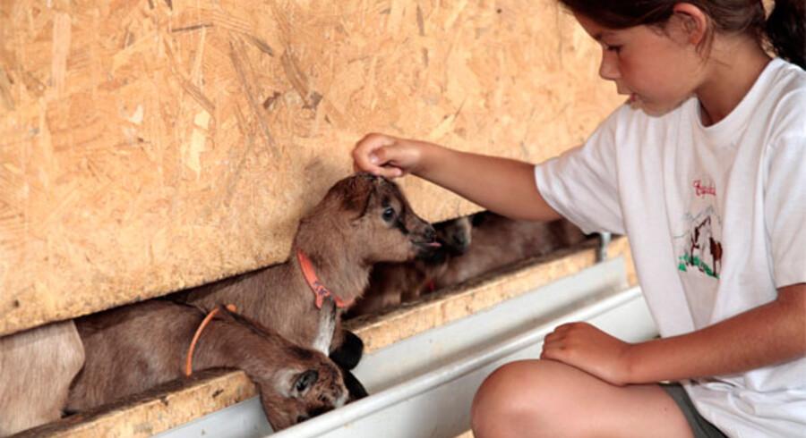 Dyr er altid et hit hos børn, og derfor går man sjældent galt i byen med en bondegårdsferie. Fotoet her er dog ikke fra det nedenfor omtalte Duca di Castelmonte.