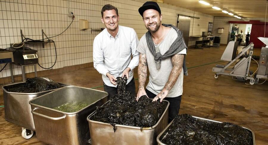 Nordisk Tang i Grenå laver tangprodukter, har endnu kun få maskiner. Iværksætter er Heine Max Olesen. Her er Heine og hans medejer