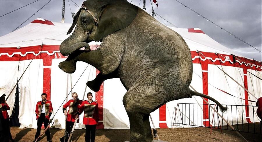 Arkivfoto: Cirkus Dannebrog er gået konkurs efter mange år med stort underskud.