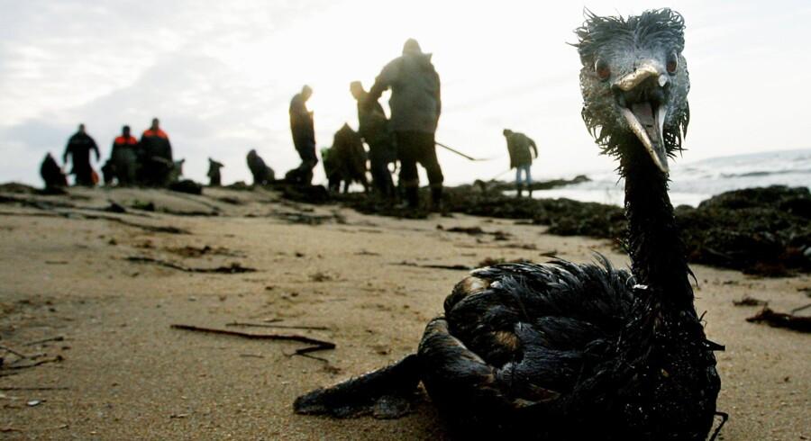 Affald smidt i havet flyder tusindvis af kilometer til polaregnene, og naturen i de artiske områder er også ekstremt sårbare for olieforureninger. Denne forureningskatastrofe skete for otte år siden i Sortehavet.
