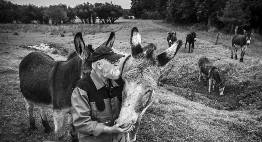 »Vi er alt for naive. Vi kan ikke tage alle. Det er jo millioner af mennesker, vi taler om. Og folk fra Afrika kommer til at fryse heroppe,« mener Poul Høgh, der er ude for at se til sine æsler, som han har gående ude ved kæret.