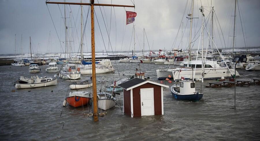 Hornbæk Havn fredag eftermiddag.