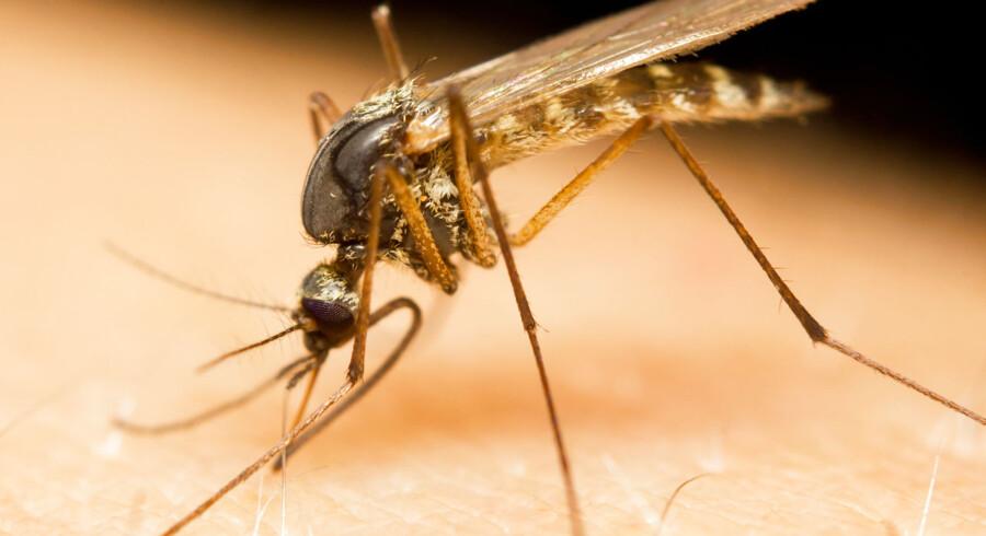 Det er ifølge forskere alarmerende, at parasitten spreder sig så hurtigt. Spreder den sig også til Afrika, vil det være katastrofalt, siger de.