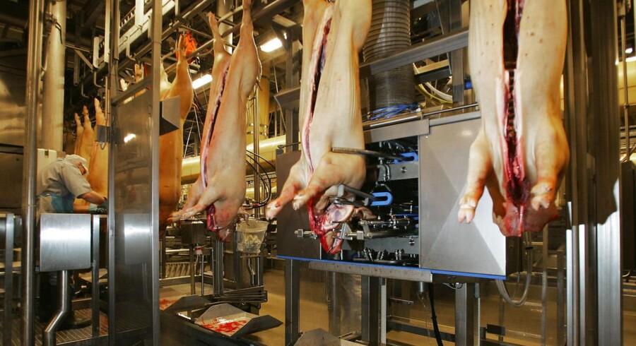Antallet af danske slagtesvin svinder ind, og det skaber krisetilstand over alt i branchen. Nu er tillidsmændene for medarbejderne på Danish Crown gået aktivt ind i kampen for at redde fremtidens job.