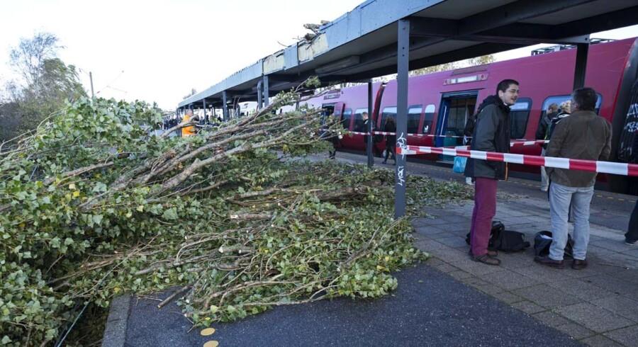 Oprydningen på DSB's banelegemer og stationer er i fuld gang. Og den er omfattende efter mandagens voldsomme storm og orkan, der bevægede sig hen over Danmark. Her et træ, der er væltet på Dyssegård Station.