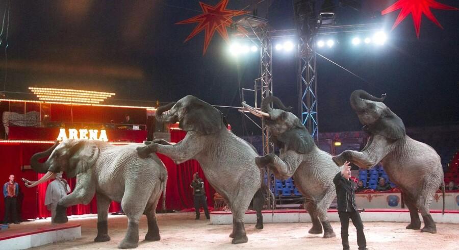 Arkivfoto fra Cirkus Arena.