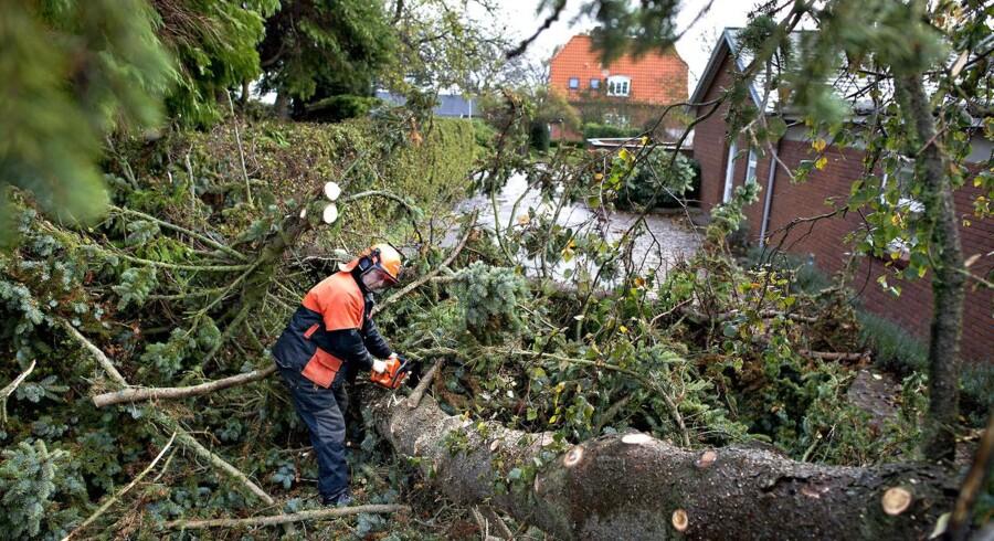 Dagen derpå. Her er man i gang med at fjerne væltede træet ved Fælledvej i Fredericia