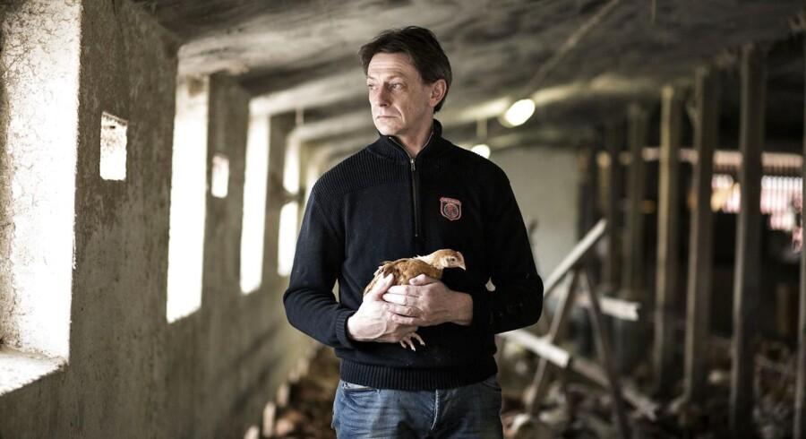 Morten Højskred Hansen er økologisk kyllingeproducent i Tommerup på Fyn. efterspørgslen er enorm og han ville genre udvide produktionen, men kan ikke få lov af banken.