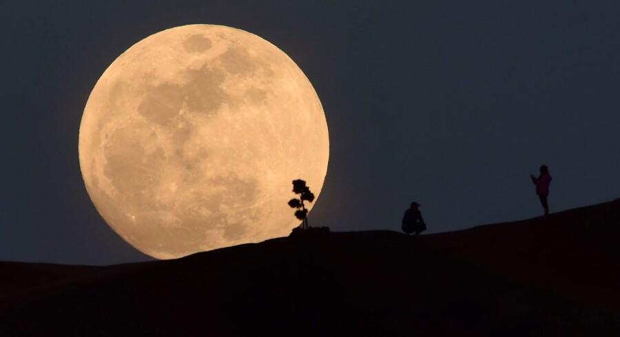 En kombination af månefænomener vil onsdag klæde himlen på store dele af kloden. Her poserer en person foran månen i Griffith Park i Los Angeles.