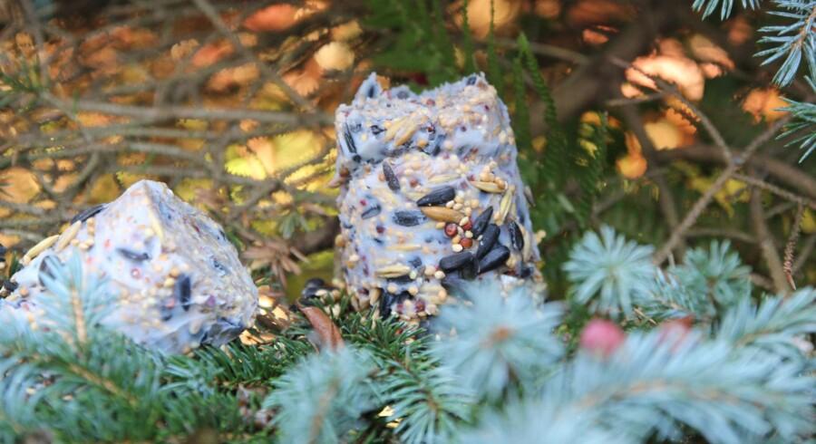 Når fedtet er stivnet fjernes plastkoppen. De dekorative kugler kan hænges rundt i haven. Gerne synligt fra et vindue.