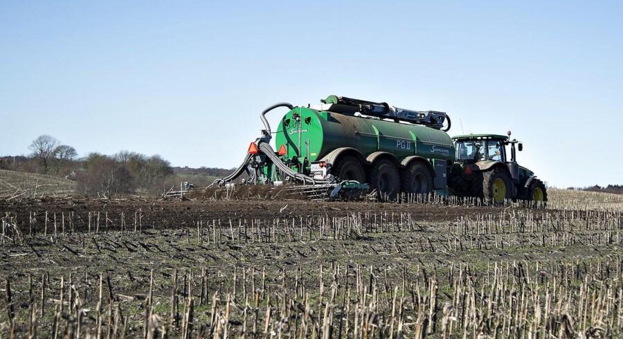 Et sikkert forårstegn er store maskiner, der kører gylle ud på landmændenes marker. Før spredte man det gennem luften, nu bruges andre metoder for at begrænse gyllelugten. Her er en landmand ved Vebbestrup nord for Hobro igang med arbejdet med at nedfælde gyllen på en mark, der har været brugt til majs sidste år.
