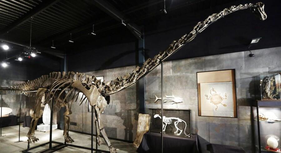 Skelettet »Misty« - en ikonisk genstand, mener Statens Naturhistoriske Museum, der selv betegner købet som »et kup«.