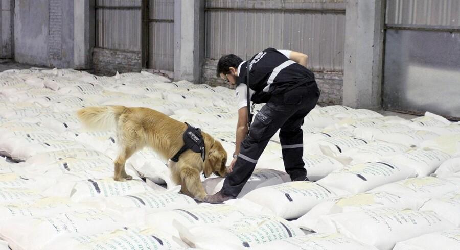 En argentinsk narkobetjent undersøger det ?parti ris i officielle FN-sække, som med hunde-snuders kyndige hjælp viste sig at indeholde i 30 kilo kokain. Foto: Argentinsk politi