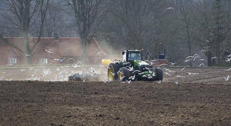 En dansk gennemsnitslandmand har en gæld på godt 30 millioner kroner, og mange er ikke i stand til at afdrage på gælden. Situationen ventes at medføre et stort antal tvangsauktioner og drastiske prisfald på landbrugsjord og truer de banker, der har mange landmænd blandt deres kunder. Arkivfoto: Torben Christensen