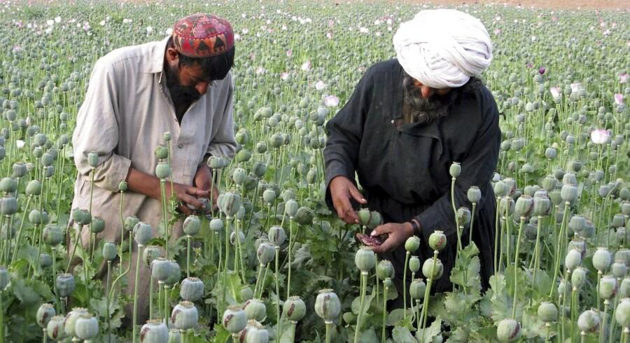ARKIVFOTO. Forsvarsordfører for Socialdemokraterne Ole Hækkerup vil ikke tage ansvar for det opium, der nu bliver dyrket på en dansk militærbase i Afghanistan.