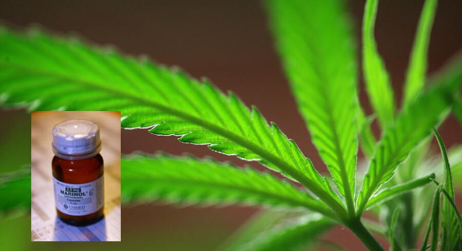 Eksperter mener ikke, at medicin (det lille billede), lavet på udtræk af cannabisplanten (det store billede) virker ligeså godt som andre fx lovlige præparater.