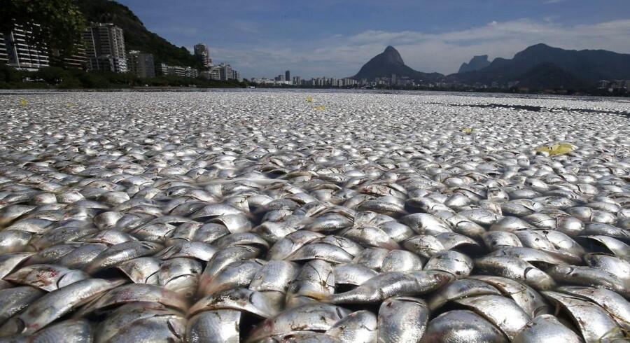 Iltsvind som følge af forurening medførte sidste år omfattende fiskedød i Rodrigo de Freitas-søen ved Rio de Janeiro i Brasilien og er endnu et eksempel på, at menneskets resourceforbrug koster dyrt for klodens dyre- og planteliv.