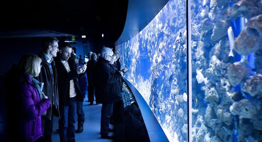 Den Blå Planet, Danmarks Akvarium i ny udgave, havde stort besøg i påsken.