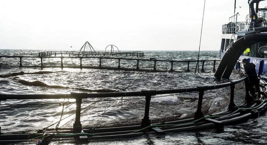 Opdræt af fisk i havbrug har stort set ligget stille i Danmark de seneste 20 år på grund af en restriktiv miljøpolitik, mens branchen globalt set vokser og oplever vækst. Herhjemme suger havets landmænd omkring 11.000 ton regnbueørreder op om året, hvor man i Norge hiver én million ton op. På Musholm A/S ved Reersø står man for 3.000 ton. Hvis virksomheden forsat skal kunne følge med udenlandske konkurrenter, bliver de nødt til at udvide med nye havbrugsanlæg. Hos Miljøministeriet og Ministeriet for Fødevarer, Landbrug og Fiskeri er man ved at lægge sidste hånd på en ny strategi, der skal åbne for en øget produktion i dansk havbrug.