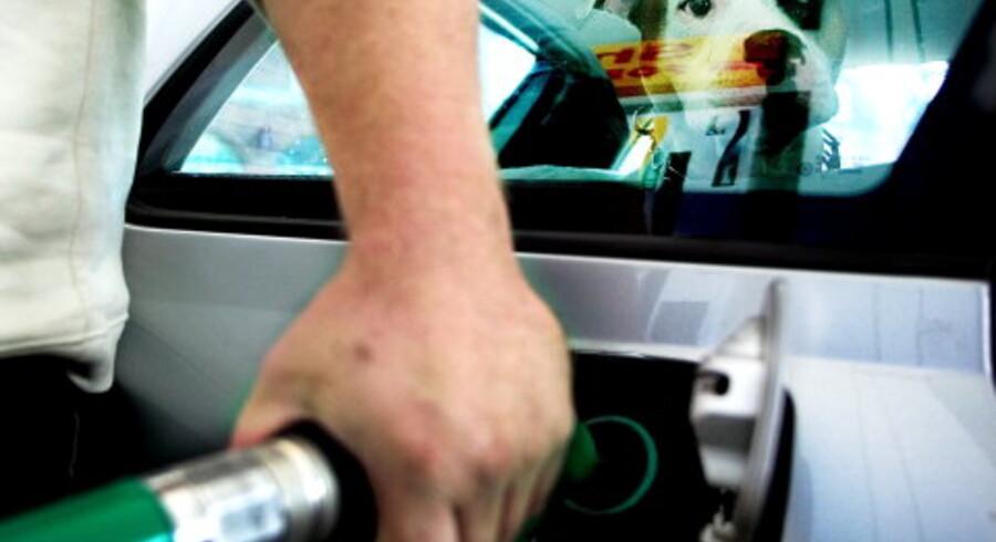 Kenzo kigger på inde fra bilen, mens dens ejer tanker benzin. Foto: Nanna Kreutzmann/Scanpix