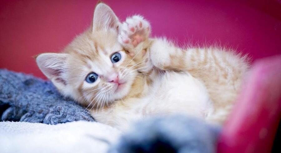 Ulovlig gift mod dræbersnegle er årsag til at flere katte har mistet livet.