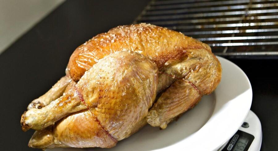 Selv om campylobacter hærger hundredtusindvis af danske maver hver år, ligger den ikke særligt langt fremme i vores bevidsthed. Almindelig god køkkenhygiejne og gennemstegning af kyllingekød er stadig rådet mod maveonderne.