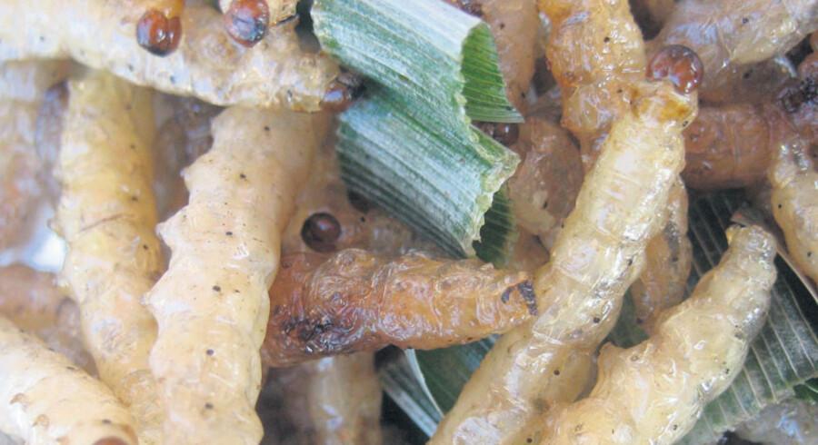Ikke lige, hvad man forventer at se i Torvehallerne i København, men måske kommer det en dag.  FN anbefaler, at vi begynder at spise flere insekter som disse fra et marked i Thailand.