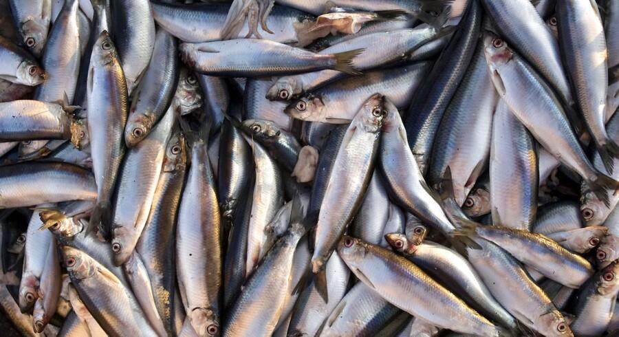 Fødevarestyrelsen har udgivet ti nye kostråd, der blandt andet råder danskerne til at erstatte kød med fisk og spise mere fuldkorn.