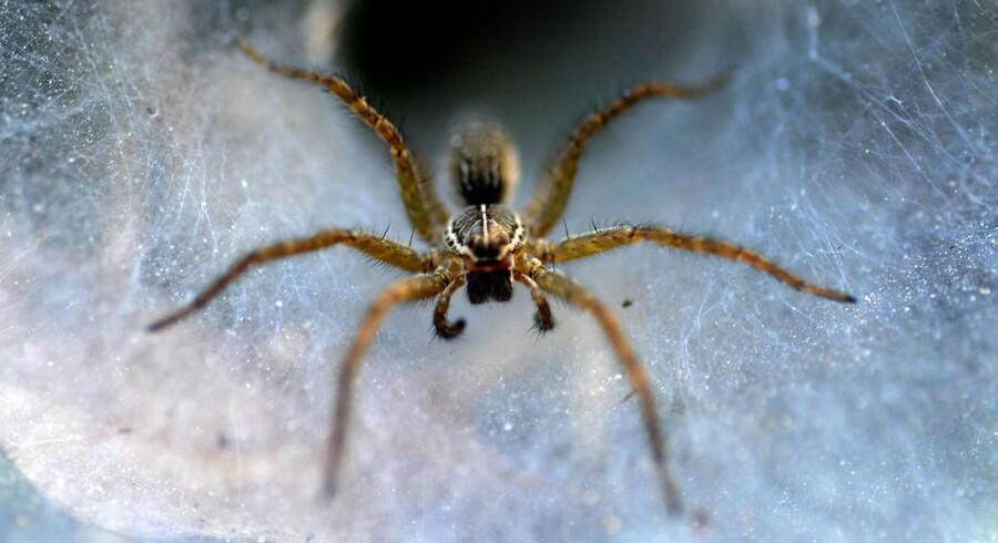 Edderkopper findes i titusindvis af arter - på landjorden, i skovene og enkelte tilmed under vand. Edderkoppernes evolution er formentlig blevet formet af ændringer i klimaet, der har åbnet op for nye tomme nicher, hvor edderkopperne kunne udvikle sig uden konkurrence fra andre edderkopper.