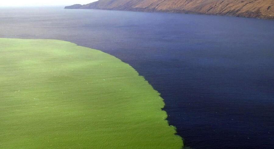 Voldsom misfarvning af havet som følge af kraftig undersøisk vulkansk aktivitet nær den canariske ø El Hierro.