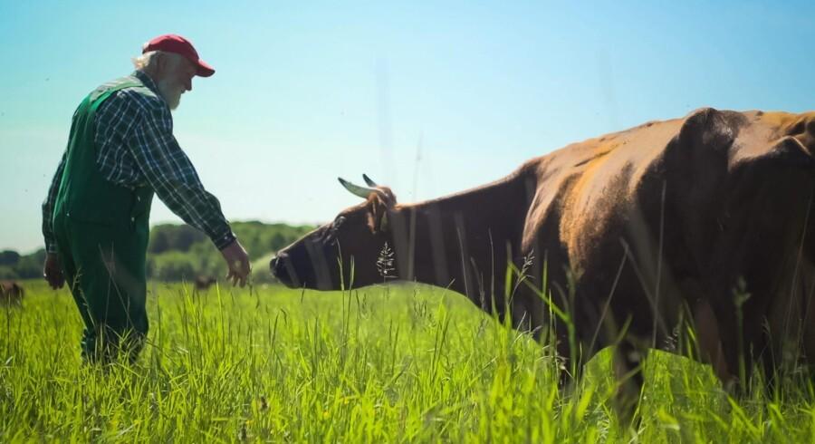 Niels Stokholm er en stille og stålsat idealist, der dyrker biodynamisk landbrug tæt ved Dronningmølle. Foto: PR