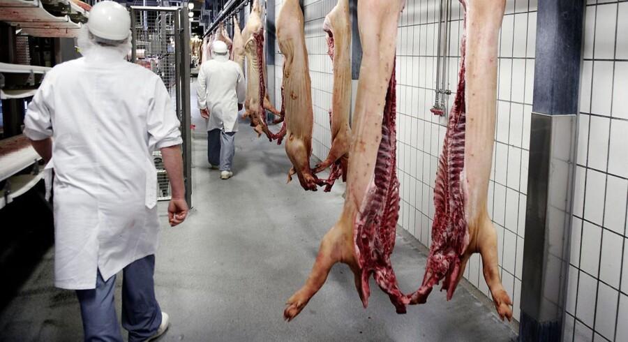 Medarbejderne på Danish Crowns slagterier har endnu ingen afklaring fået på fremtiden. Her et foto fra Danish Crowns slagteri i Ringsted.