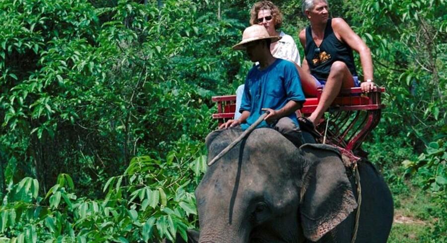 Det er snart slut med at ride på elefanter i Thailand.