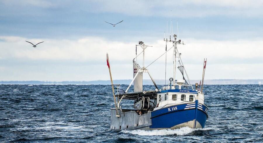 Fiskematadorer har i så høj grad koncentreret de danske fiskekvoter hos sig, at de mindre lokale fiskere er tvunget til at gå i land. Her ses fisker Max Christensens kutter Jamik på vej ind i Vedbæk havn