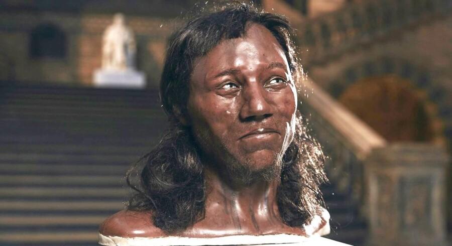 En rekonstruktion af den såkalde »Cheddar Man's« ansigt, udstillet på »London Natural History Museum«.